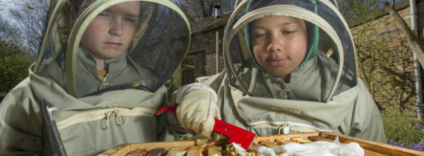 junior beekeepers final